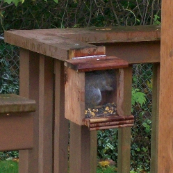 young squirrel chowing down in feeder
